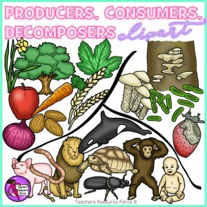Producers, Consumers and Decomposers Clip Art
