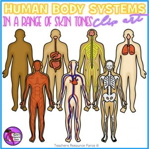 Human Body Systems Science Realistic Clip Art