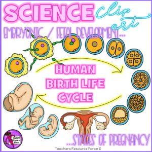 Human Birth Life Cycle Fetal Development Clip Art