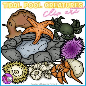 Tidal Pool Creatures Clip Art