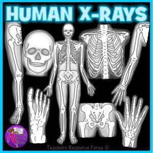 X-Ray Science Realistic Clip Art
